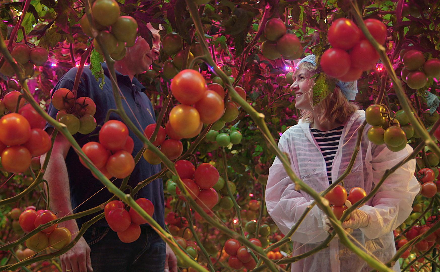 Marijn Frank van Keuringsdienst op zoek naar de toekomst van de tomaat